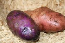 potato-2-1024x682