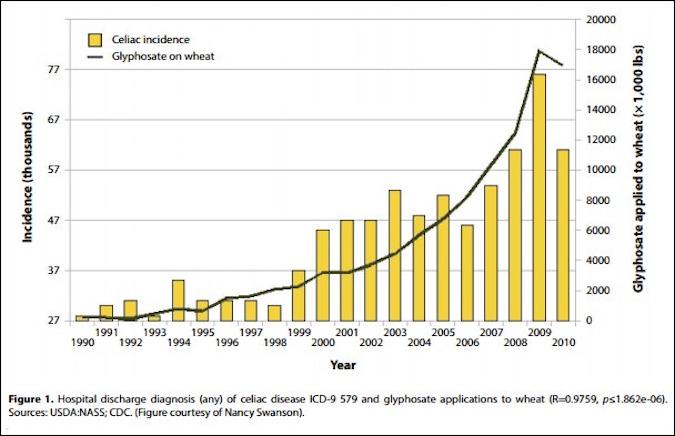 a verdaira razão pela qual o trigo é tóxico e não é por causa do gluten
