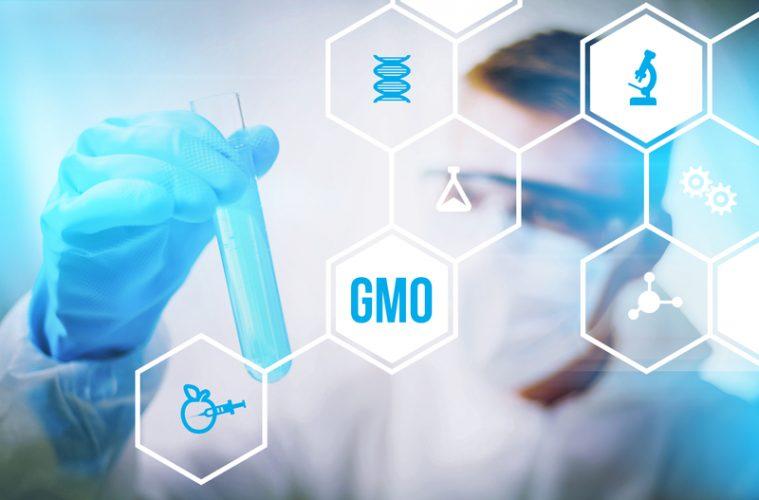 geneticamente modificados 2